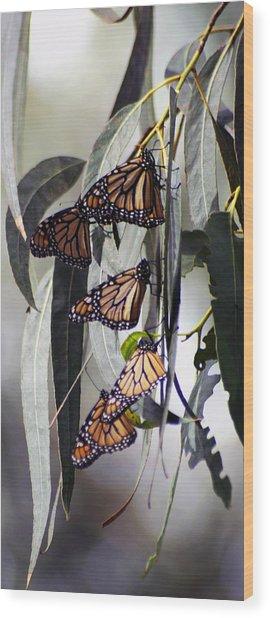 Pismo Butterflies Wood Print