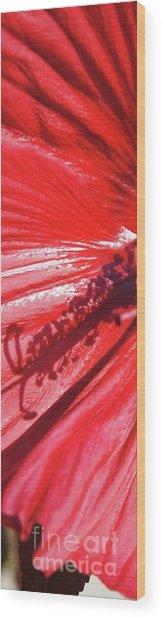Pistil Shadow Wood Print