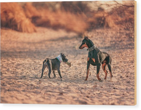 Pitbull And Doberman Wood Print