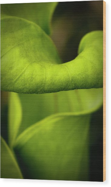 Pitcher Plant Abstract Wood Print