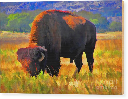 Plains Buffalo Wood Print by JohnD Smith