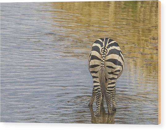 Plains Zebra Wood Print