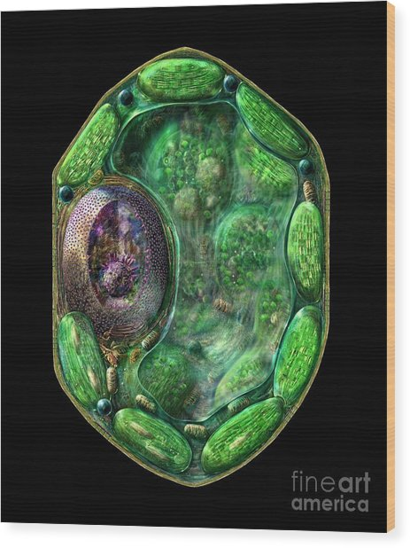 Plant Cell Wood Print
