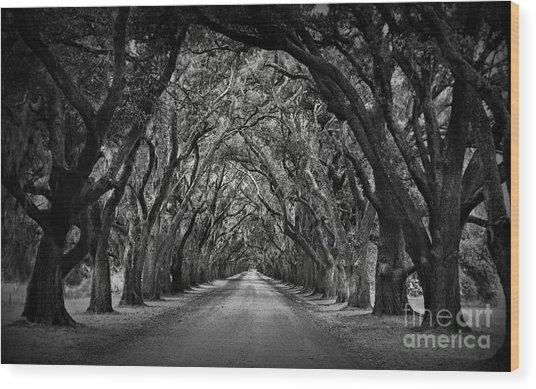 Plantation Oak Alley Wood Print