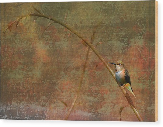 Plate 225 - Hummingbird Grunge Series Wood Print