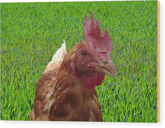 Play Chicken Wood Print