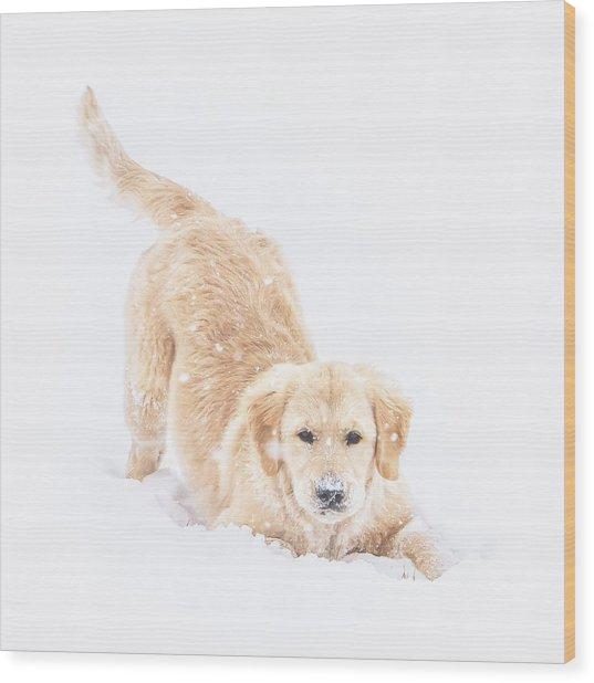 Playful Puppy Wood Print