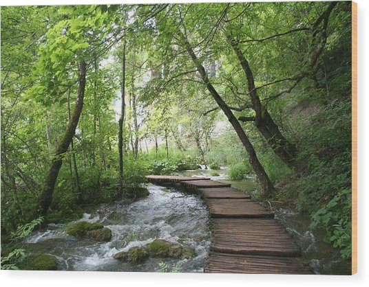Plitvice Lakes National Park Wood Print