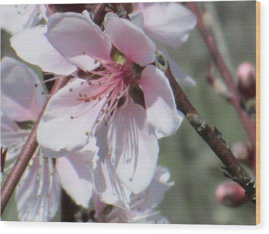 Plum Bloom Wood Print by Rosalie Klidies