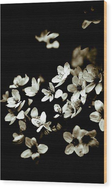 Plum Blossoms Wood Print by Frank Tschakert