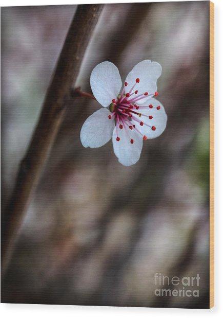 Plum Flower Wood Print