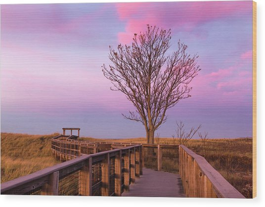 Plum Island Boardwalk With Tree Wood Print