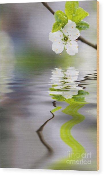 Plum Tree Blooming Wood Print