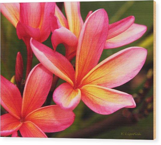 Plumeria - Pretty Pink Wood Print