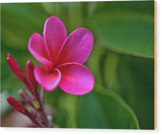 Plumeria - Royal Hawaiian Wood Print