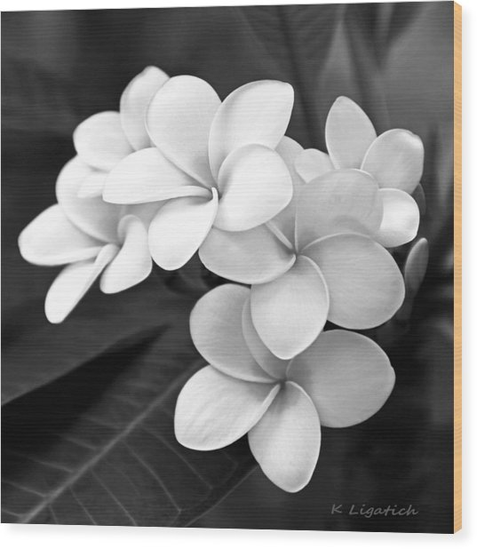 Plumeria - Black And White Wood Print