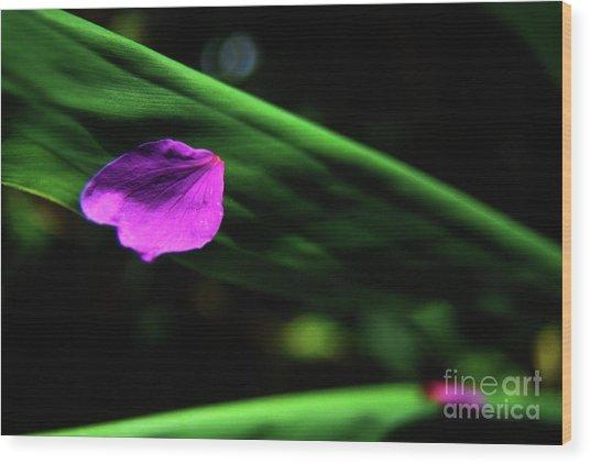 Plumeria Flower Petal On Plumeria Leaf- Kauai- Hawaii Wood Print