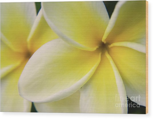 Plumeria Flowers Wood Print by Julia Hiebaum
