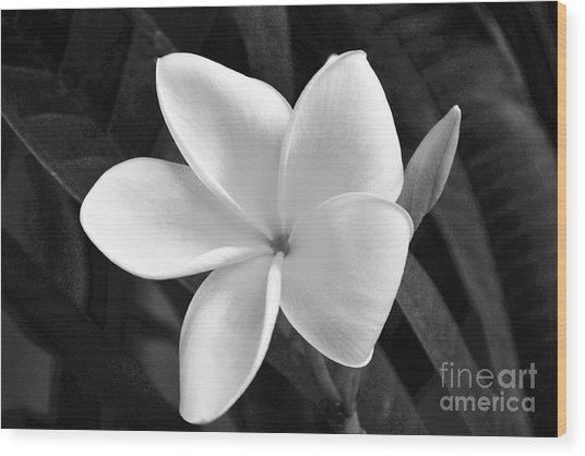 Plumeria In Monochrome Wood Print