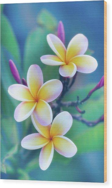 Plumerias In Pastel Wood Print