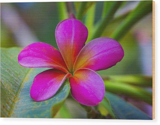 Plumeria On Leaf Wood Print