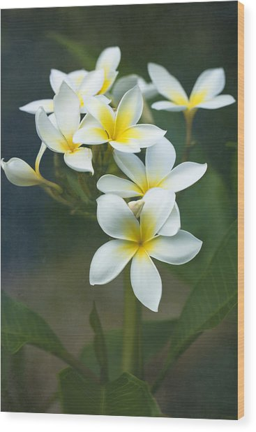 Plumerias On A Cloudy Day Wood Print
