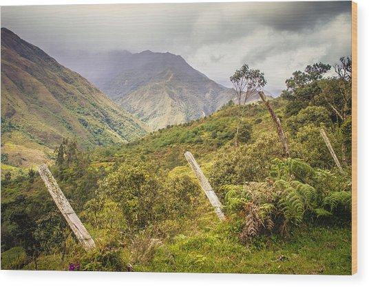 Podocarpus National Park Wood Print