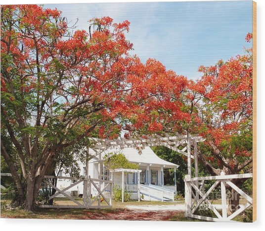 Poinciana Cottage Wood Print
