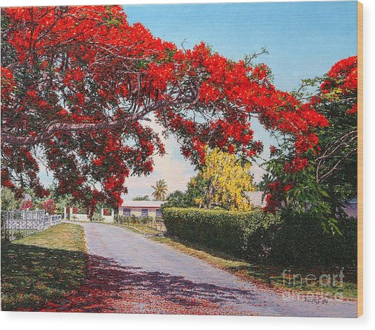 Poinciana Shadows Wood Print