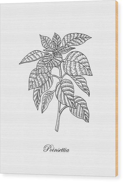 Poinsettia Botanical Drawing Wood Print