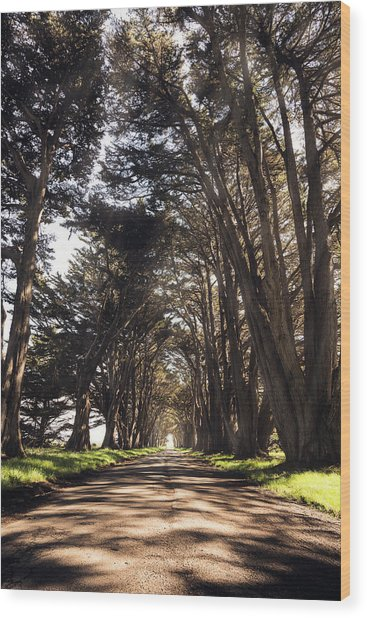 Point Reyes Light Rays Wood Print by Gray Mitchell