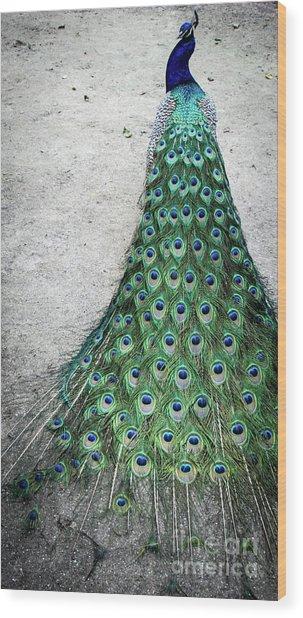 Poised Peacock Wood Print