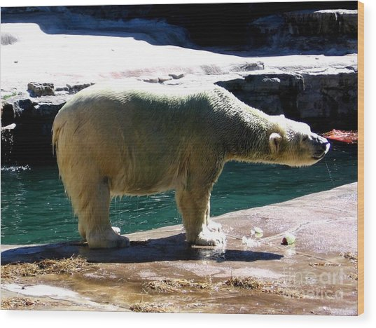 Wood Print featuring the photograph Polar Bear 3 by Rose Santuci-Sofranko