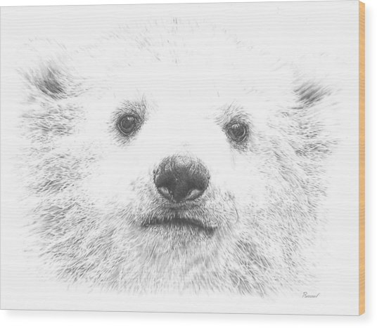 Polar Bear Cub Wood Print