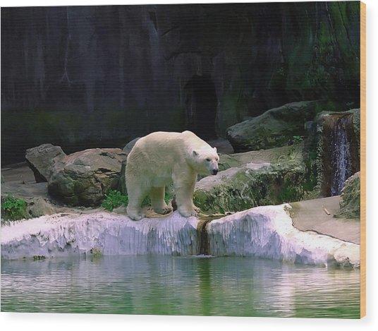 Polar Bear Wood Print by Pat Carosone