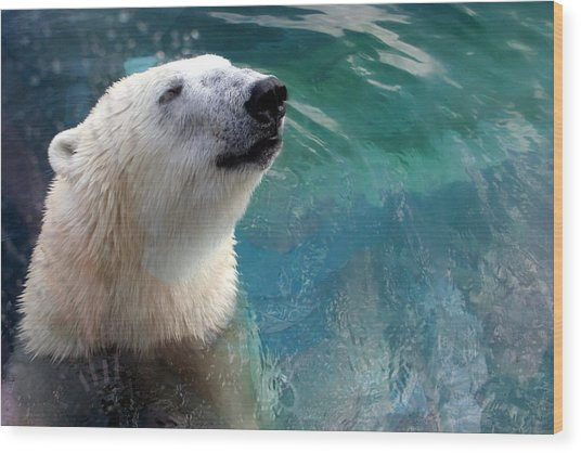 Polar Bear Up Close Wood Print