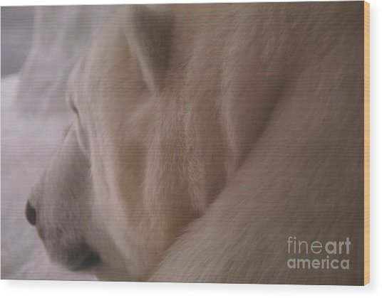 Polar Dream Wood Print