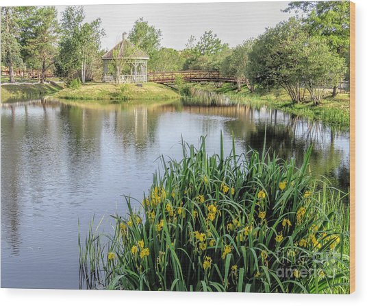 Pond And Gazebo At Cordage Park   Wood Print by Janice Drew