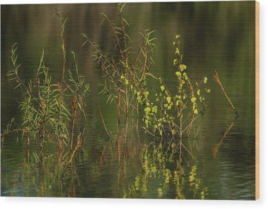 Pond Color Wood Print