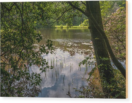 Pond In Spring Wood Print