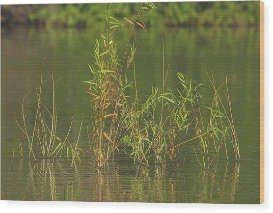 Pond Life Wood Print