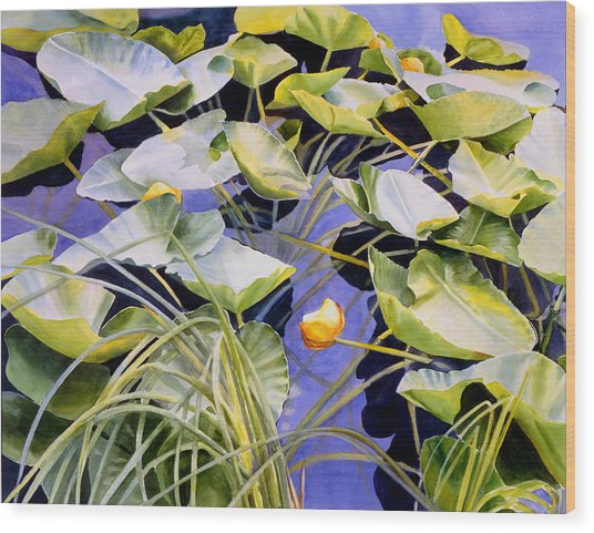 Pond Lilies Wood Print