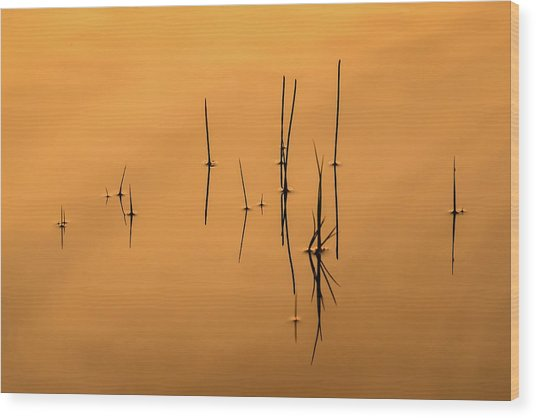 Pond Reeds In Reflected Sunrise Wood Print