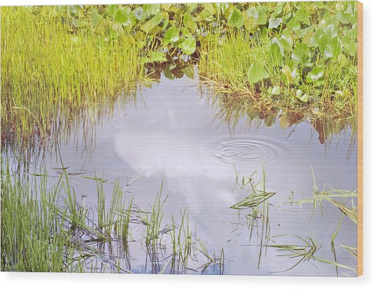 Pond Ripples Photo Wood Print