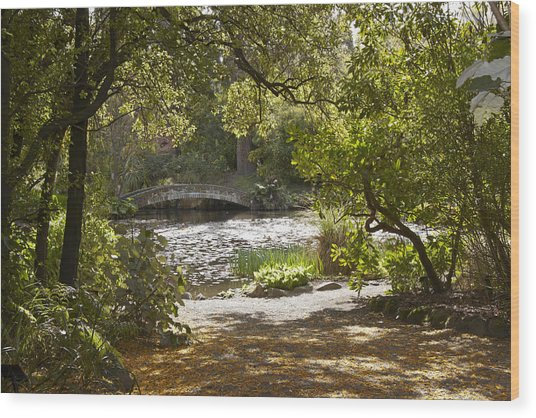 Pond View With Kowhai Petals Wood Print by Geoff Bryant