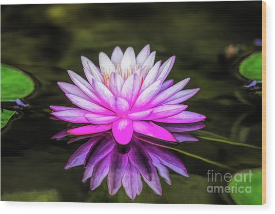 Pond Water Lily Wood Print