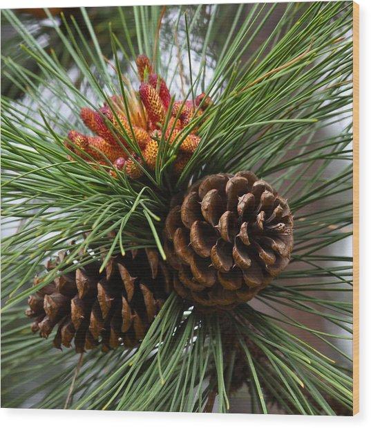 Ponderosa Pine Cones Wood Print