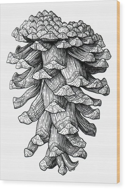 Ponderosa Pinecone Wood Print by Kirsten Wahlquist
