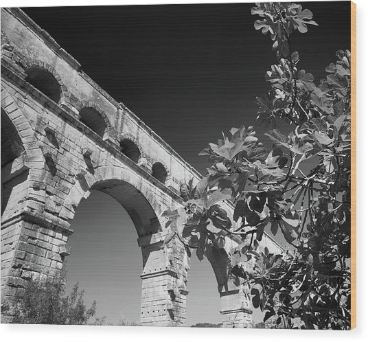 Pont Du Gard And Fig Tree Wood Print