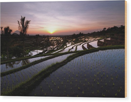 Pools Of Rice Wood Print